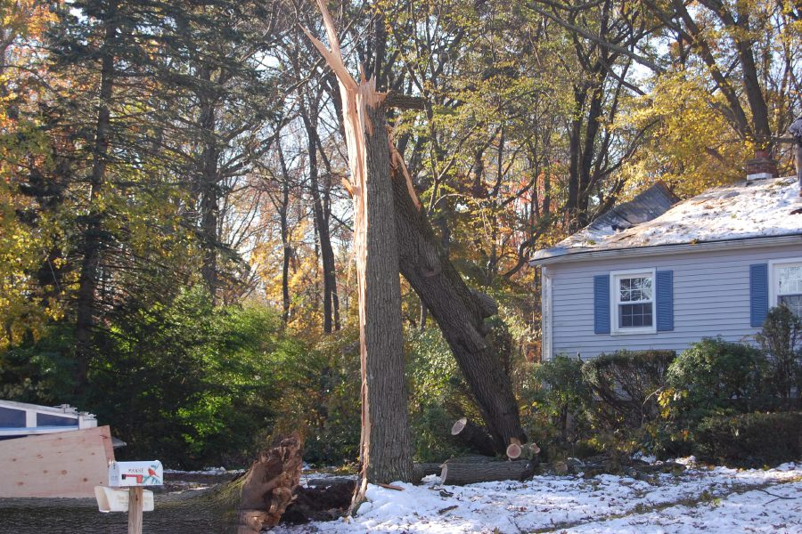 File photo – A tree snapped in half and landed on the roof of a house during the October Snowstorm.