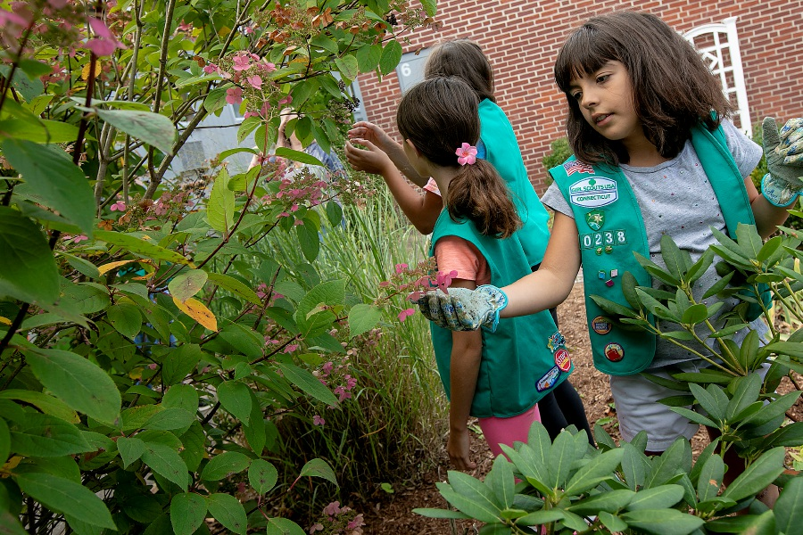 Dave Zajac/Record-Journal – Girl Scout Kayla Dwyer, 10, right, looks over pink hydrangea petals with fellow scouts in a new garden the troop is planting at Norton School last September.
