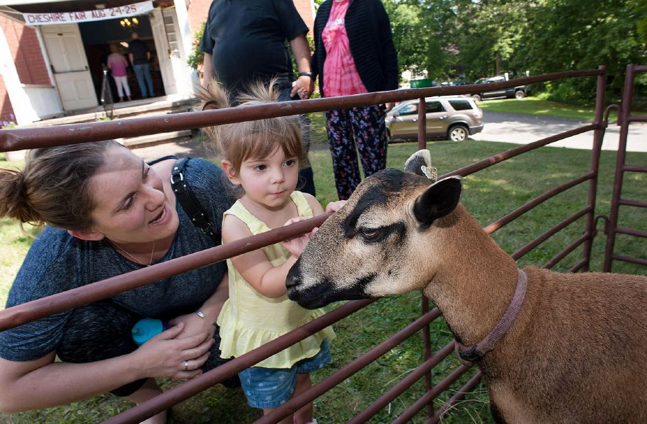 Al Valerio/Cheshire Herald – Desiree Dadio and her daughter Bianca were welcomed to the Grange Fair by a friendly sheep, who hails from Killingworth.